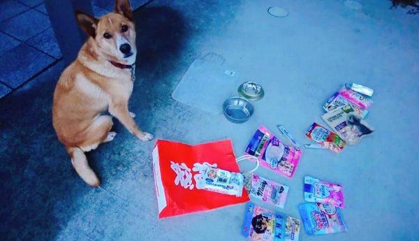 1000円で「犬福袋」を買ってきた! ワンちゃんも興味津々の充実っぷりに「これは良いお正月」「お買い得ですな」の声