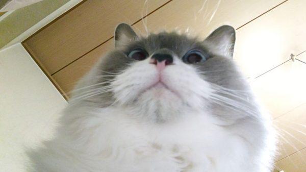 夜中になめ回してくる猫、一家に一匹いかが? 夜な夜な現れるペロリストに「幸せタイムだな」の声
