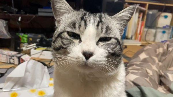 入院中の先輩ネコを探しまくる後輩ネコ…寂しさでしょぼくれた表情と病院でやんちゃを発揮する猫の関係に「早く戻ってくるといいね」の声