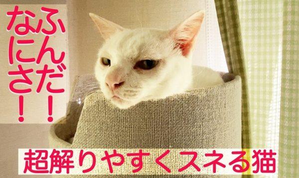 """全力でスネる猫…「ふんだ!」と""""今スネています""""と表現する顔面力に「猫ってこんなに表情豊かなんだな」の声"""