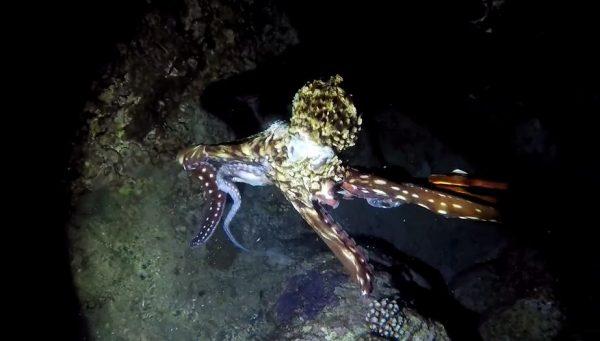 """水中のゴルゴじゃん。漁師が""""夜の奄美大島""""で素潜り漁! 狙いを定めて次々と捕らえる腕前に「当てるのうますぎ」の声"""
