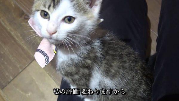 """保護猫カフェに行ってみた! 人懐っこい子猫が""""わんさか""""いる楽園に「可愛いぃ」「即オチw」の声"""