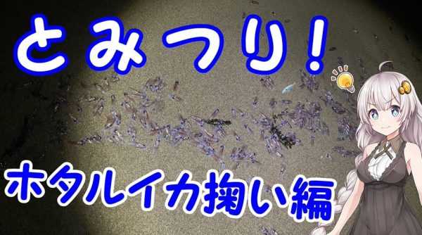 富山の春の風物詩「ホタルイカ」が大漁! 浜辺を歩くだけで網に入る光景に「やってみたい」「富山すごいな」の声