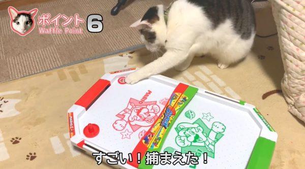 猫とエアホッケーをやってみたら上手すぎた…華麗なパックさばきをご覧あれ!