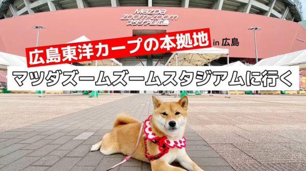 柴犬が広島東洋カープの本拠地「マツダスタジアム」へ…自転車からキョロキョロと辺りを見回す姿がかわいい!