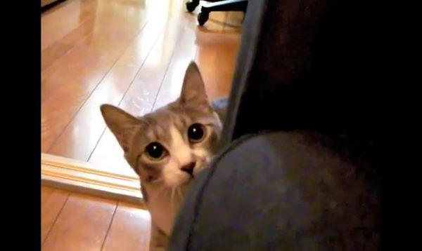 猫と「だるまさんが転んだ」をやってみた! ジリジリと迫っていた猫が一気に距離を詰めて「怖いw」「可愛い」の声集まる