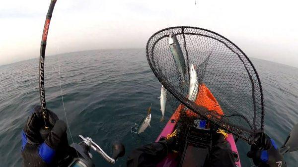 """中深海でサビキ釣り…カヤックで""""サバの群れ""""に出会い、堤防のごとくガンガン釣ってきた!"""