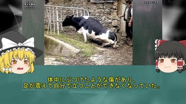 脳がスカスカのスポンジ状になり、異常行動を繰り返す牛……2001年に国内で発生した「狂牛病(BSE)」を解説