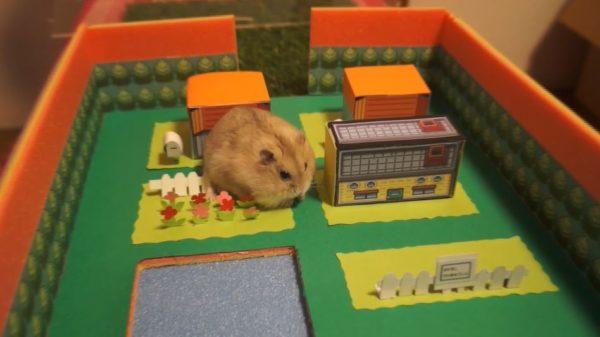 『ポケモン』マサラタウンを作って、ハムスターを遊ばせてみた! ピカチュウのごとく可愛い光景が見えるかと思いきや…?