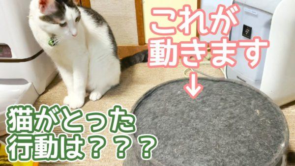 """猫に謎の物体が迫りくる! シッポがチラ見えする""""謎物体""""に猫はどう対処するのか?"""