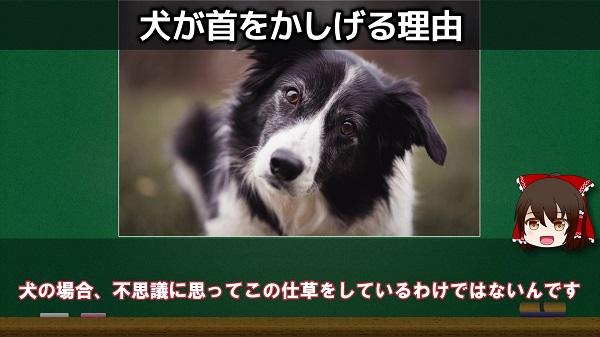 犬がキョトン顔で首をかしげるのはナゼ? 思わず愛犬を抱きしめたくなる3つの理由を解説
